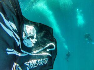 Tap: Sea Shepherd, posidonia in pericolo